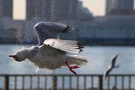 優秀賞受賞作品「鴎飛び立つ水の音」